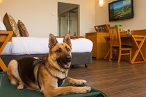 Pet Friendly Accommodation | Accommodation | Blue Mountains
