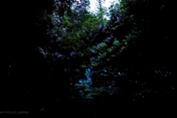 Ferns and Glow Worms