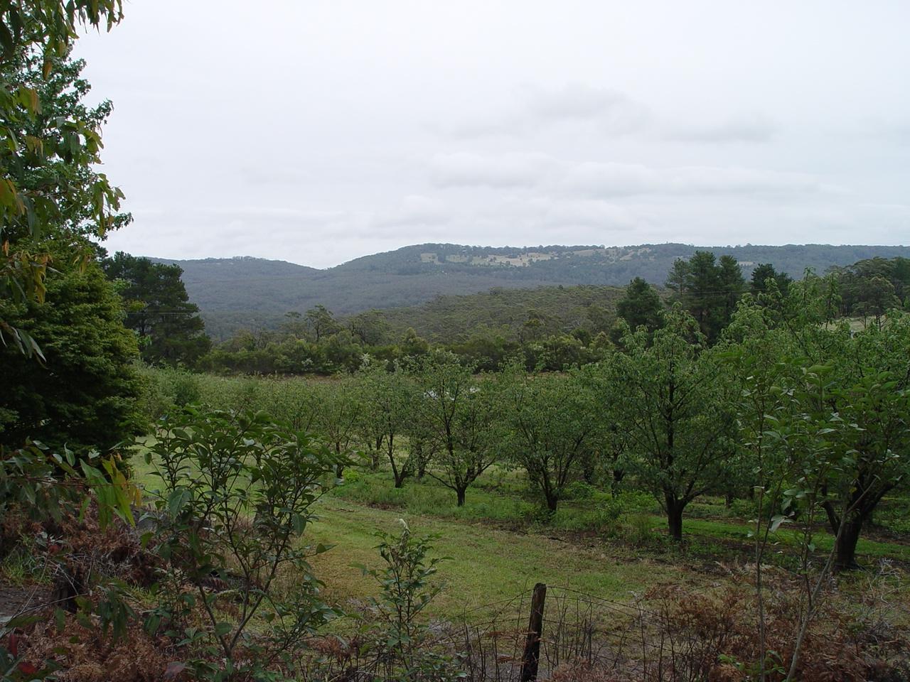 Bilpin Fruit Trees