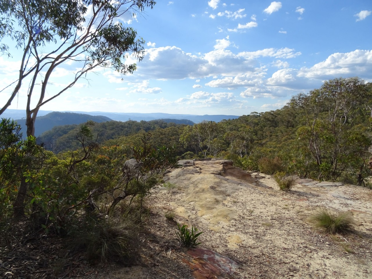 View from Mt Piddington