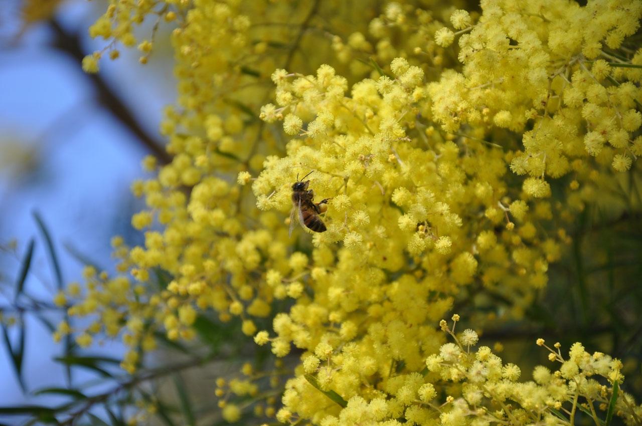 Springwood flora