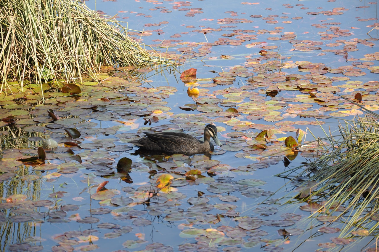 Glenbrook Lagoon