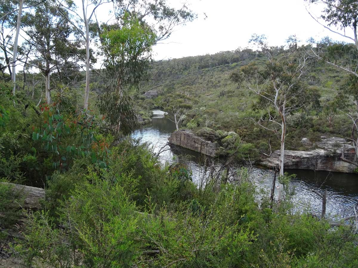 Dargan Creek Reserve