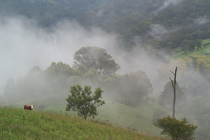 Misty Morning in Megalong Valley