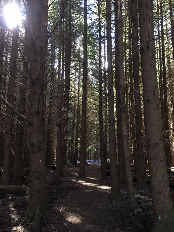 Forestry Land Rate Exemption