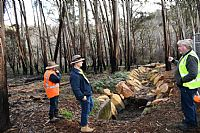 Blue Mountains Bush Focus of Recovery Efforts