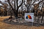 Closing Date for Bushfire Recovery Community Grants Program Extended
