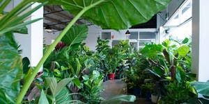 Huge Indoor Plant Warehouse Sale - Rumble in the Jungle - Sydney