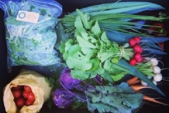 Winter vegetable share on sale now