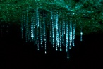 Closeup of Glow Worm web