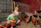 Kids in the chook shed