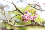 Set on 12 Acres