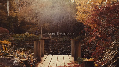Hidden Deciduous Blue Mountains Video