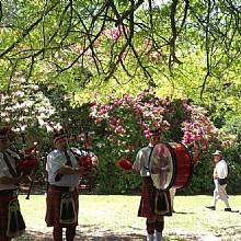 Blackheath Rhdodendron Festival