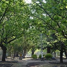 Corridor of Oaks