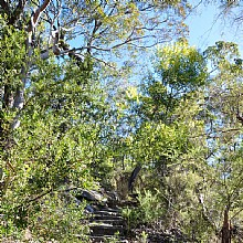 Birdwood Gully Round Walk Springwood