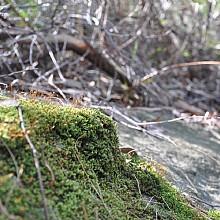 Springwood Bushwalks