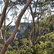 Echo Point Katoomba