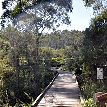 A 1km, hard surfaced loop walk across the racetrack pavement and into the heart of The Gully