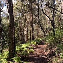 Birdwood Gully Walk