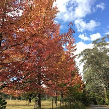 Autumn in Mount Wilson