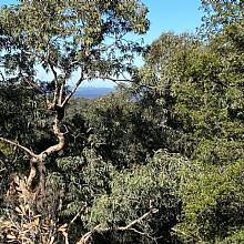 Views to Sydney
